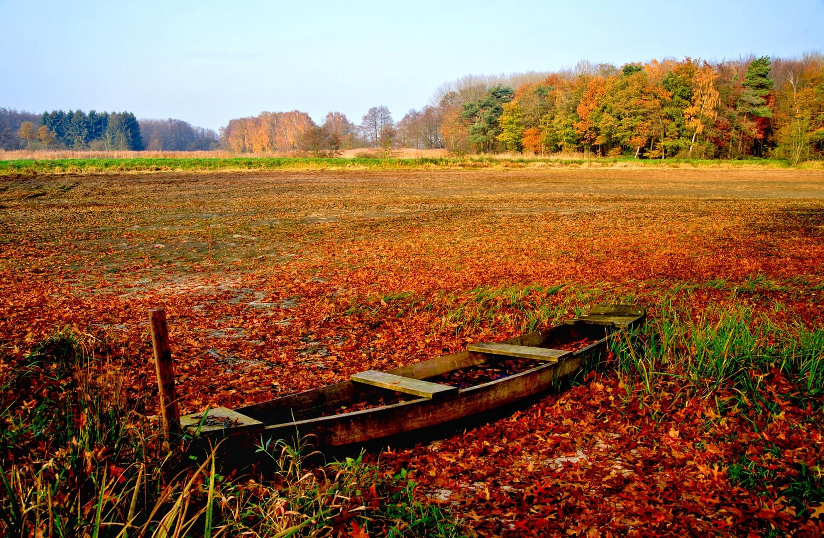 Abgelassener Fischteich.im Herbst.,...