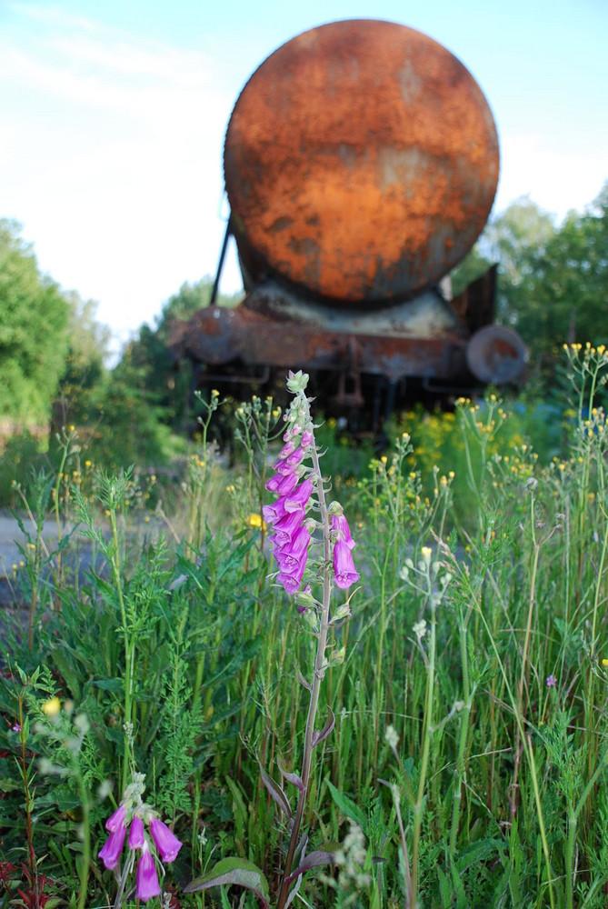 Abgestellt mit Blume