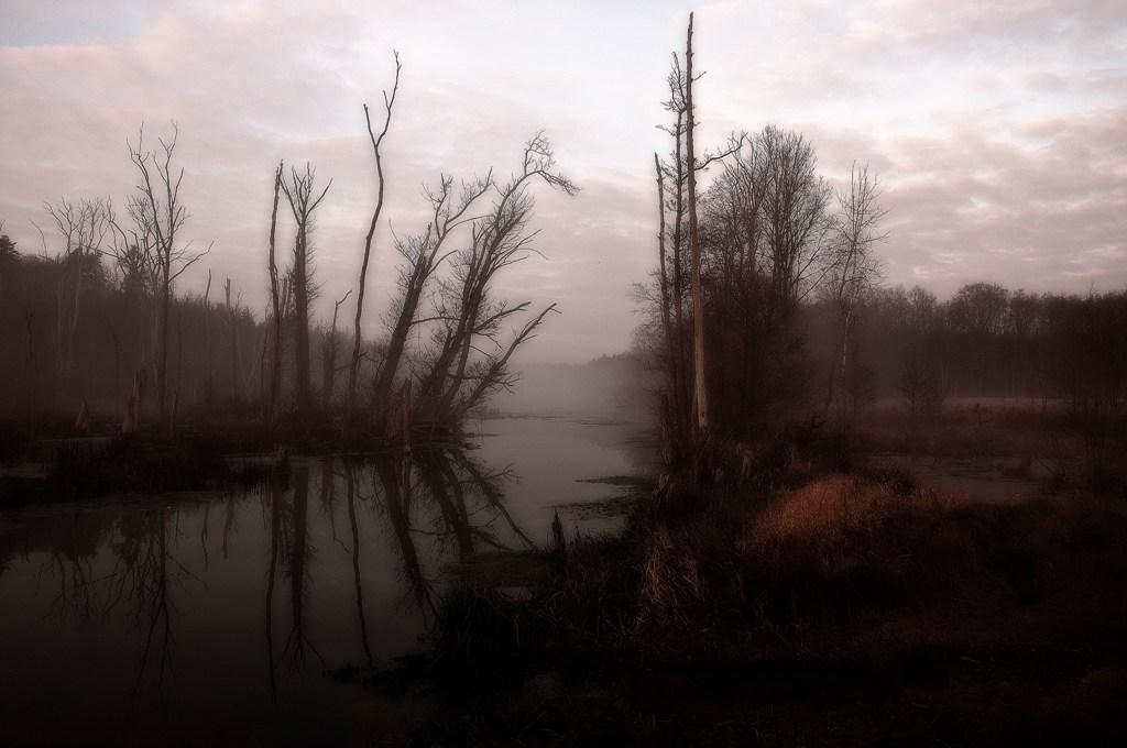 ...abgestorbene Bäume im Nebeltau...