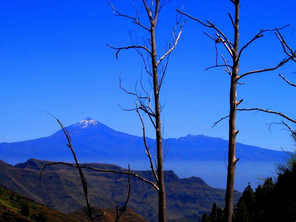 Abgestorbene Eukalyptusbäume bei La Laja - Blick auf Teide