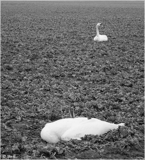 Abgestürzt und tot.....
