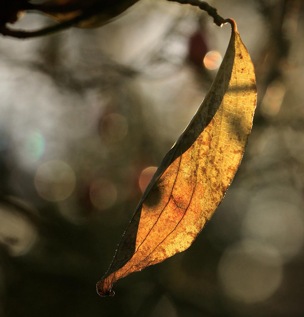 Abhängen im Herbstlicht