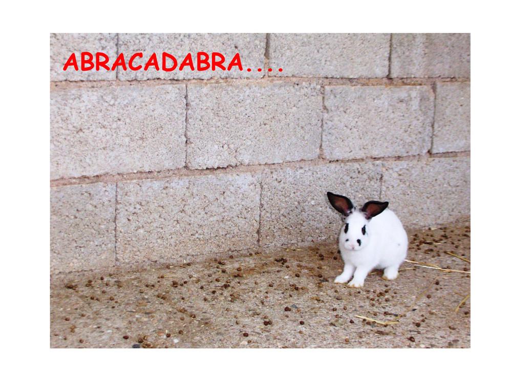 ABRACADABRA....