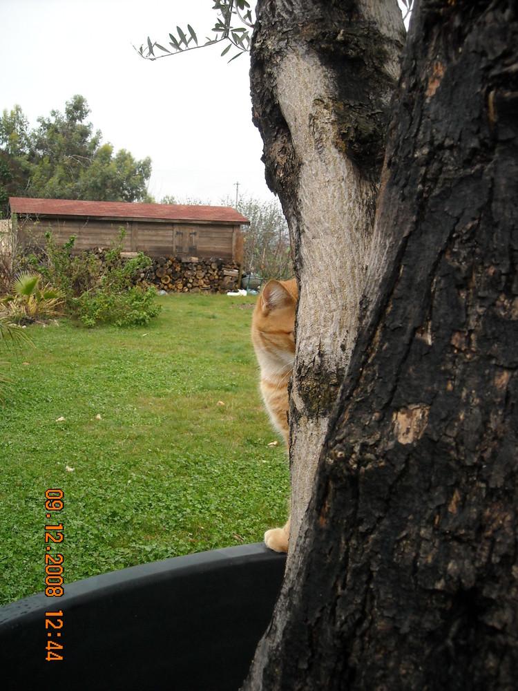 abricot et l'olivier