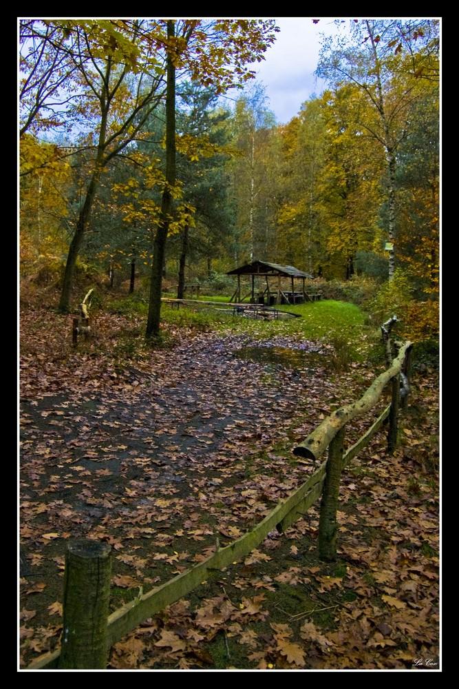 Abris forestier