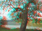 Abrupt tree
