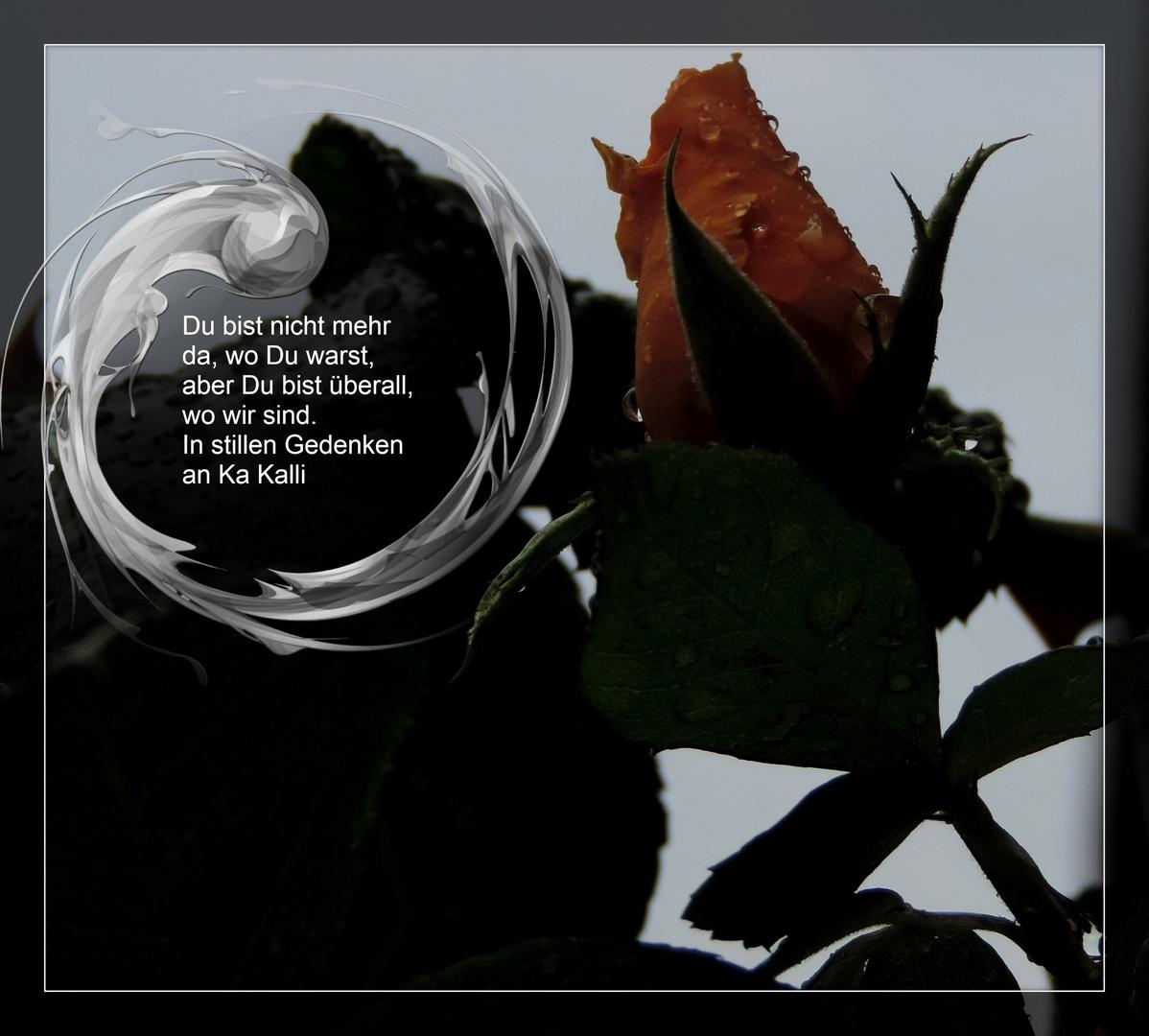 #...Abschied....#