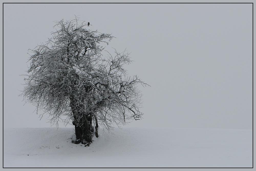 Abschied an den Winter