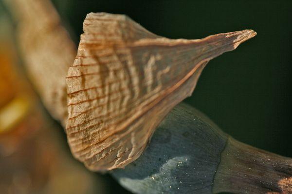 Abschied einer Wasserlilie