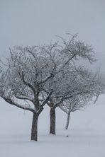 Abschied vom Winter
