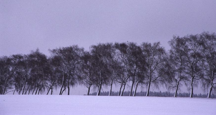 Abschied vom Winter !