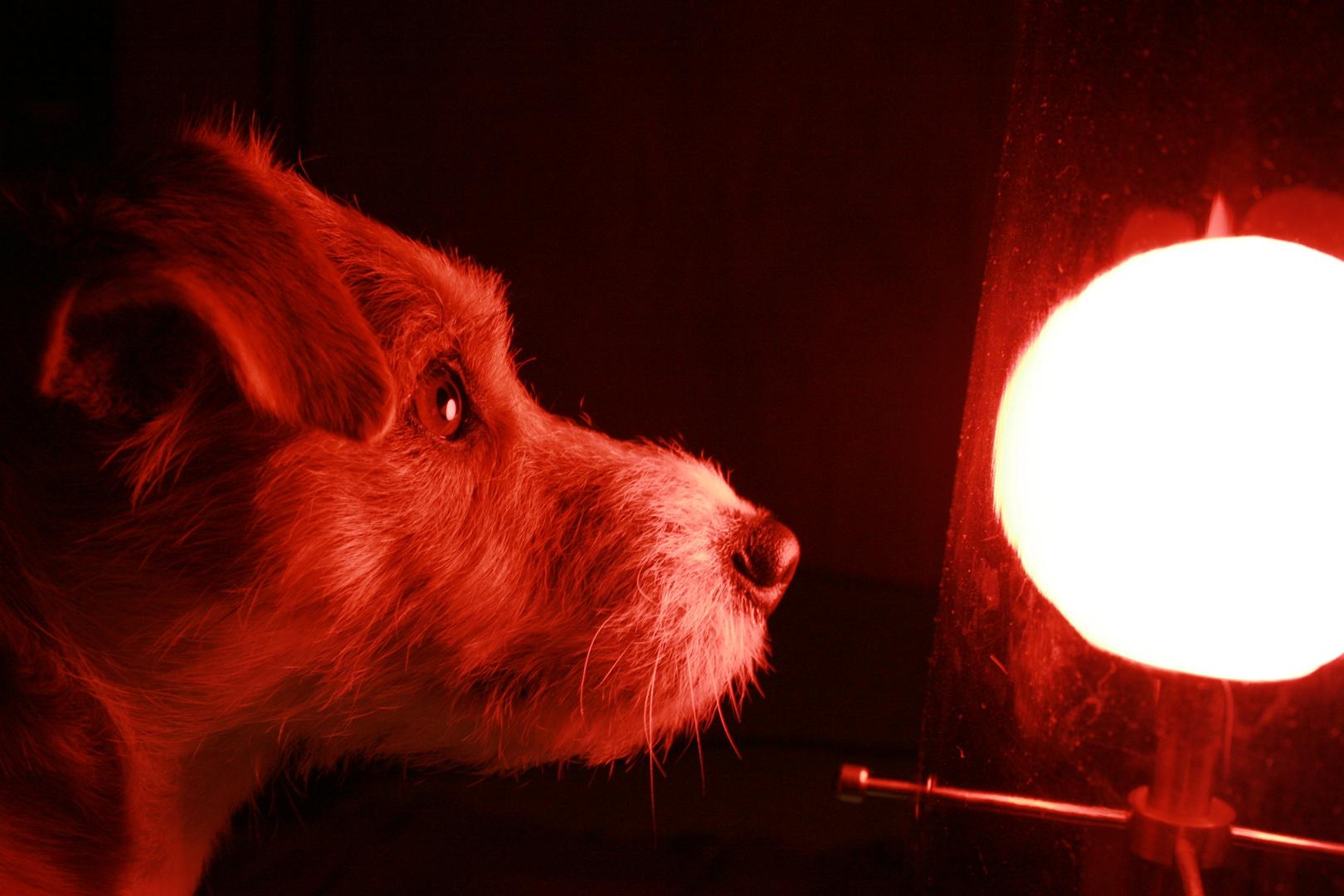 Absorbée par la lumière!