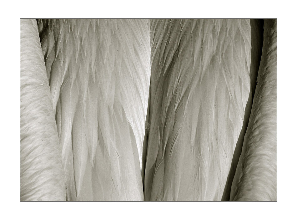 abstract animals II