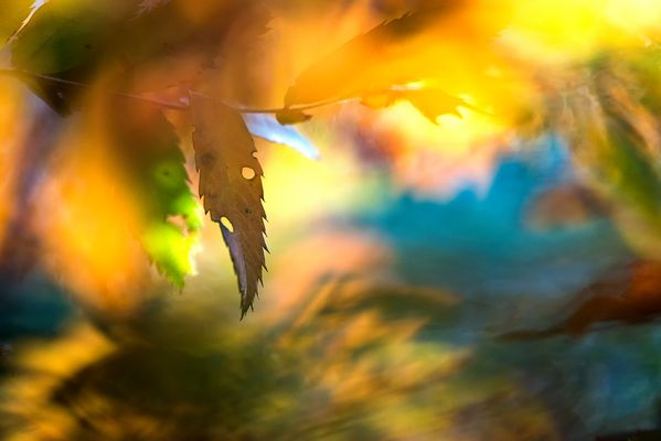 abstract autumn #1