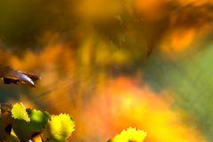 abstract autumn #2