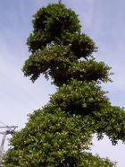 Abstrakter Baumwuchs