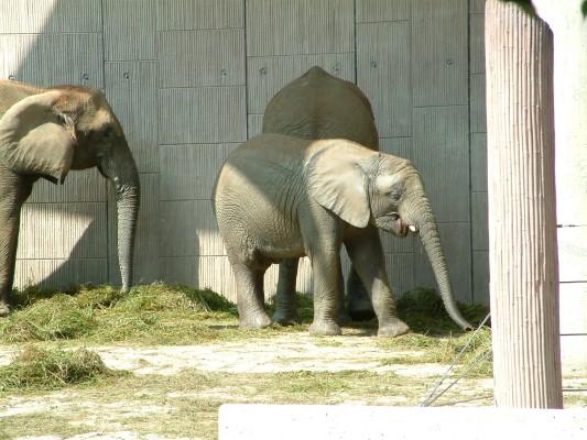 Abu und Mongu im Zoo Schönbrunn