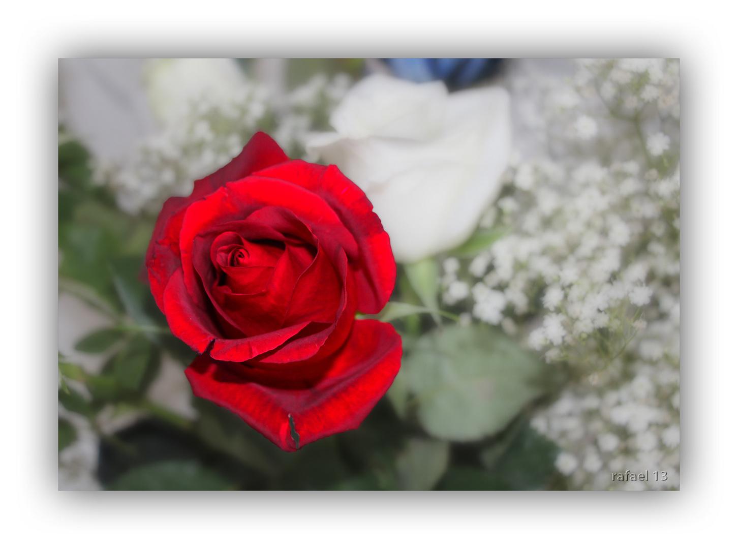 Abundando en la rosa