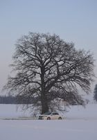 Accord vor Baum