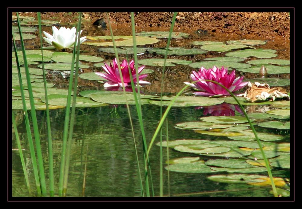 accueillant petit étang