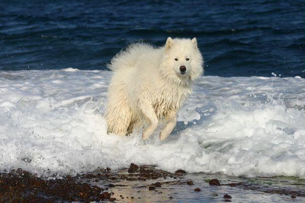 ach diese Wellen .....