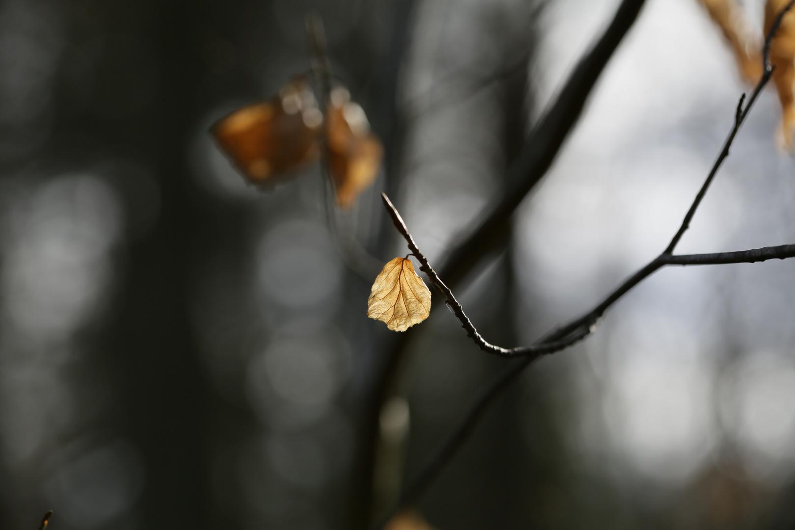Ach, in der Wald-...
