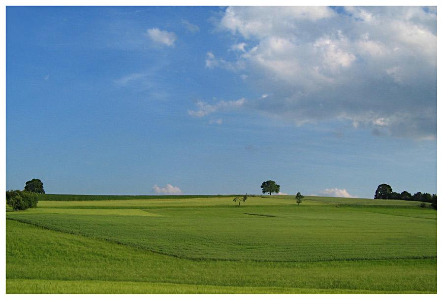 Ach is der Rasen schön grün ;o)