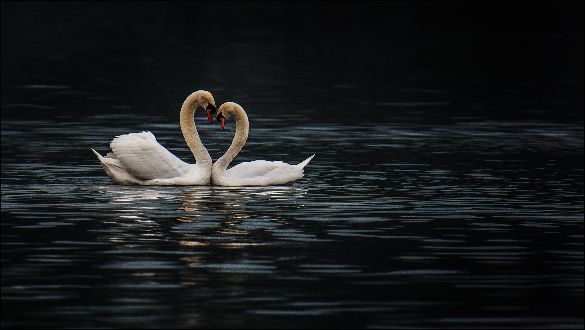 Ach muss die Liebe schön sein!
