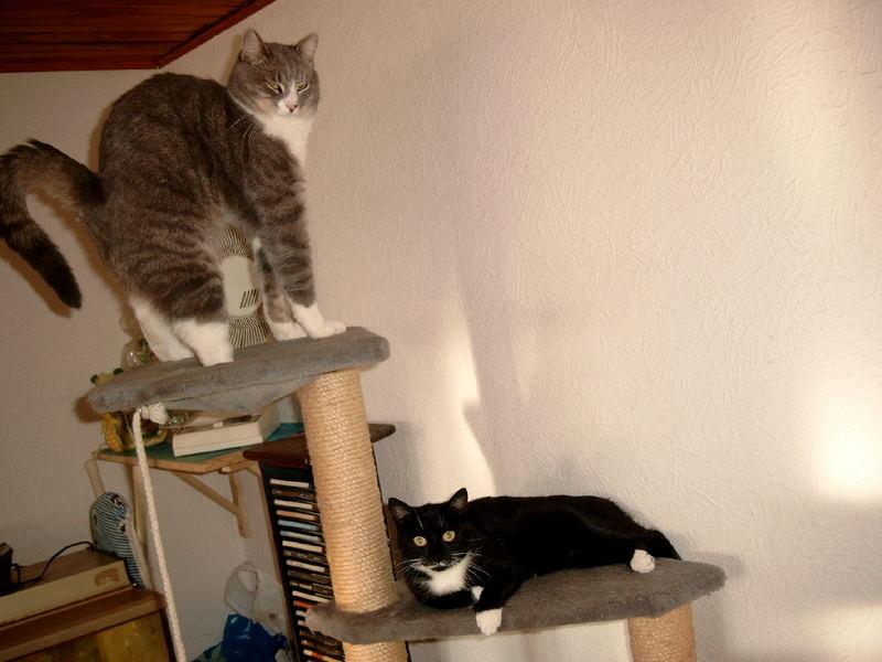 ....ach tat das Schläfchen gut.............Zola und Gizmo