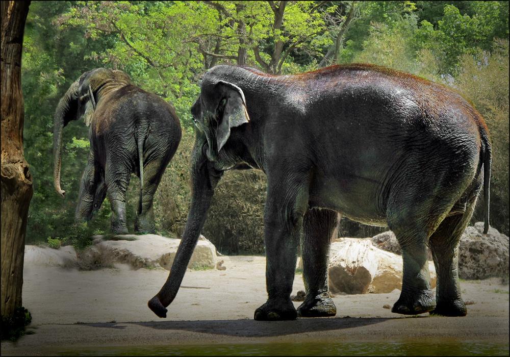 Achja, - nicht nur Elefanten ...