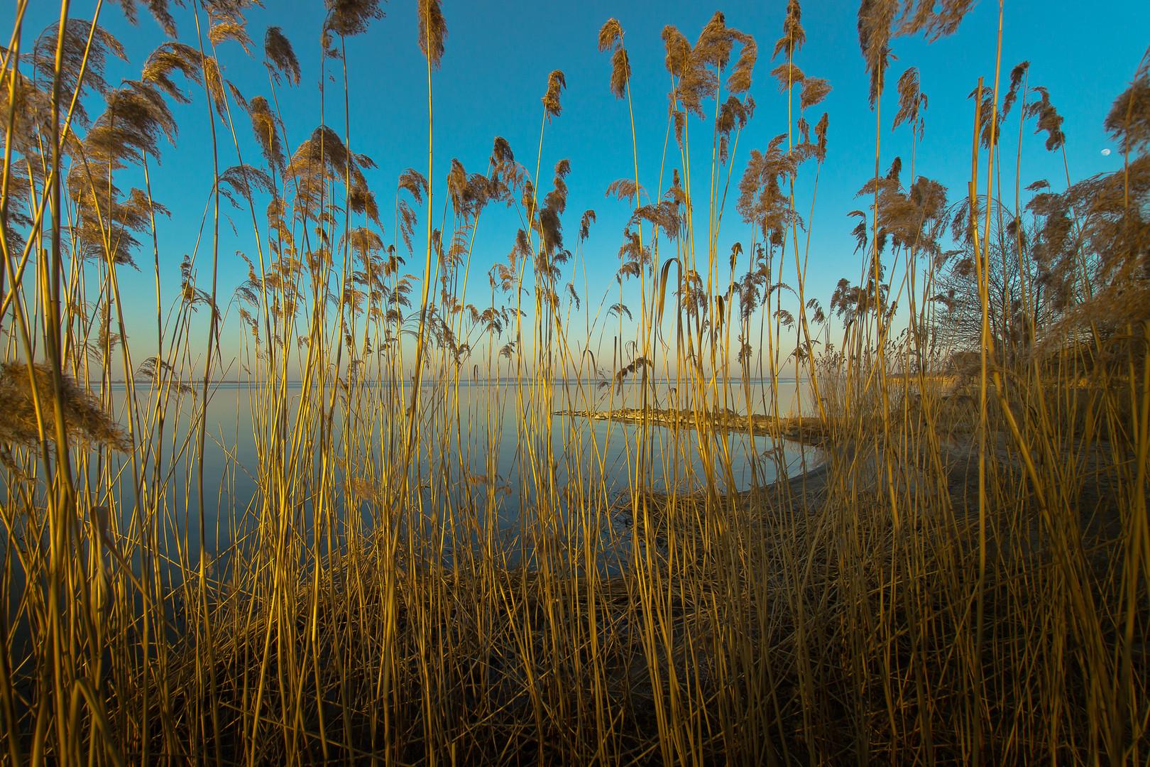 Achterwasser Usedom IV