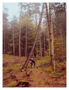 Achtung Baum fällt !