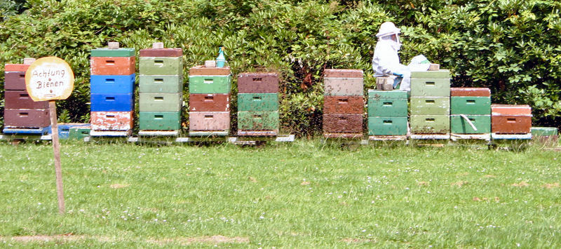 Achtung Bienen!