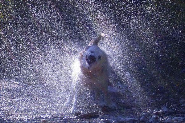 Achtung, Dusche!