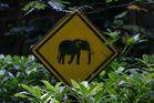 Achtung, Elefanten!