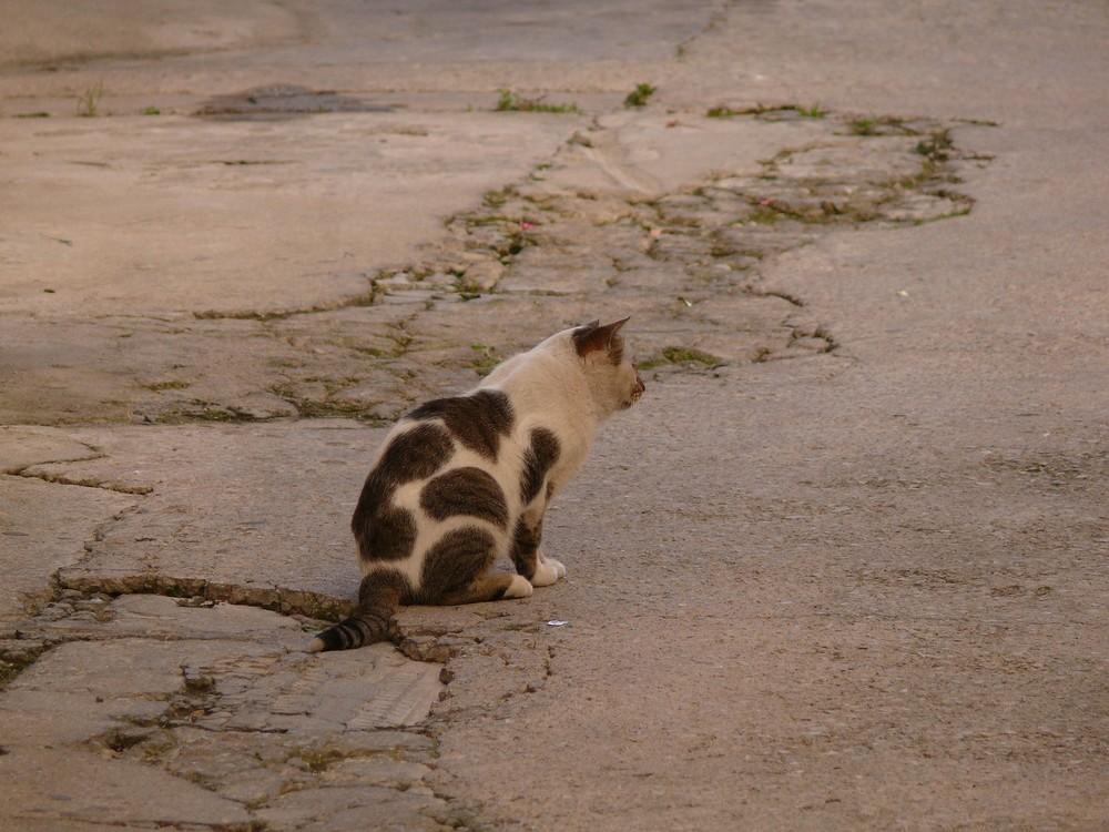 Achtung, Katze.....