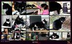 Achtung - nur für Katzenfreunde