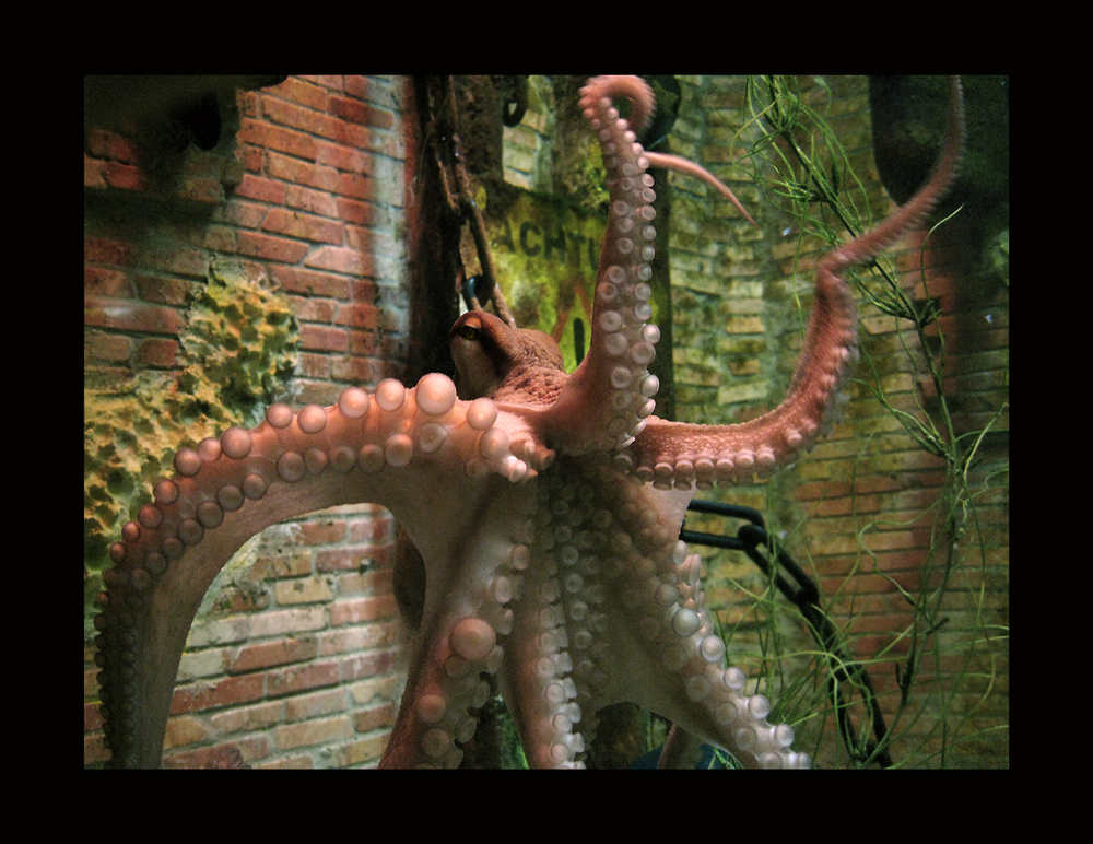 Achtung Oktopus