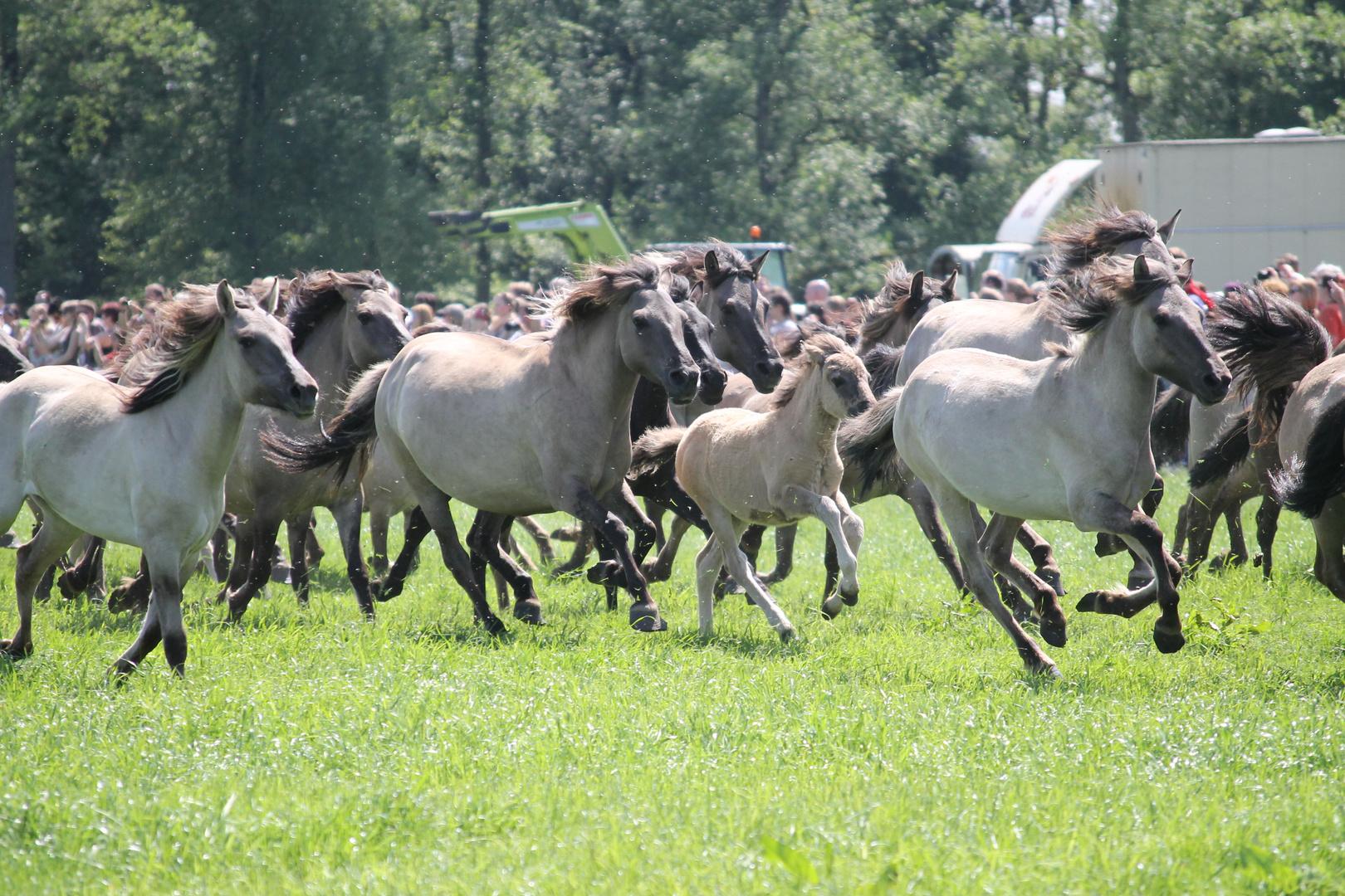achtung pferde