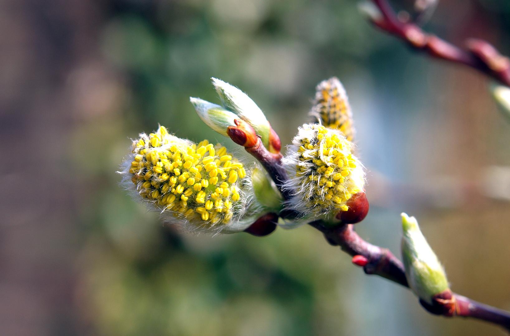 Achtung Pollenflug! ...