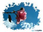 ACHTUNG ROSE VON LINKS !!!