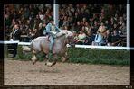 Achtung tieffliegende Pferde!