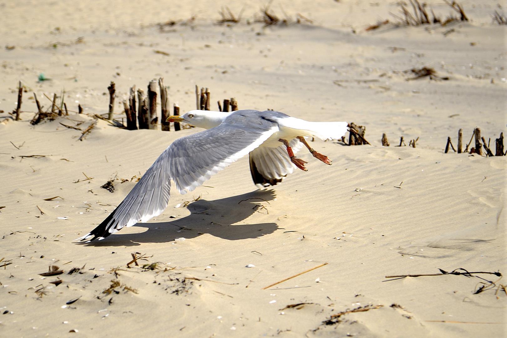 Achtung Tiefflieger am Strand