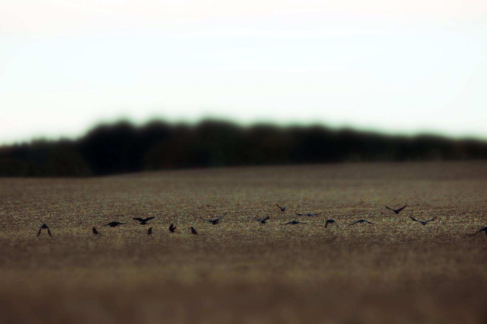 Ackerlandung