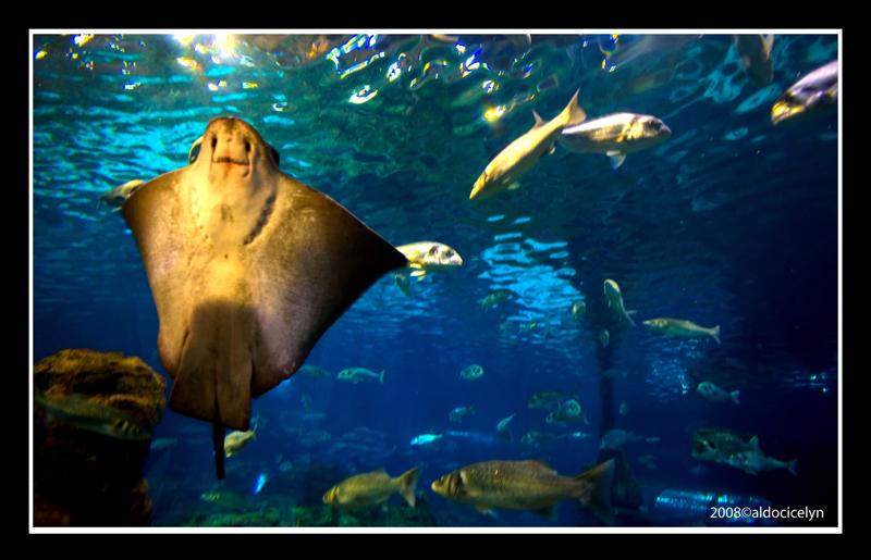 acquario (barcellona)
