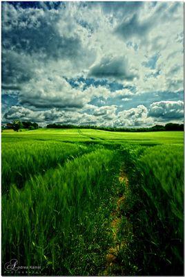 Across the green field