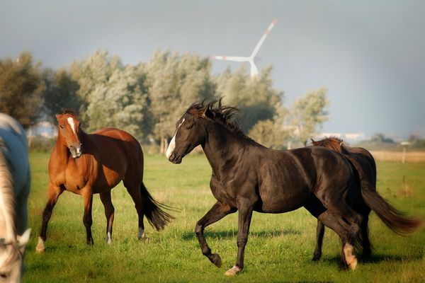 Action Horses