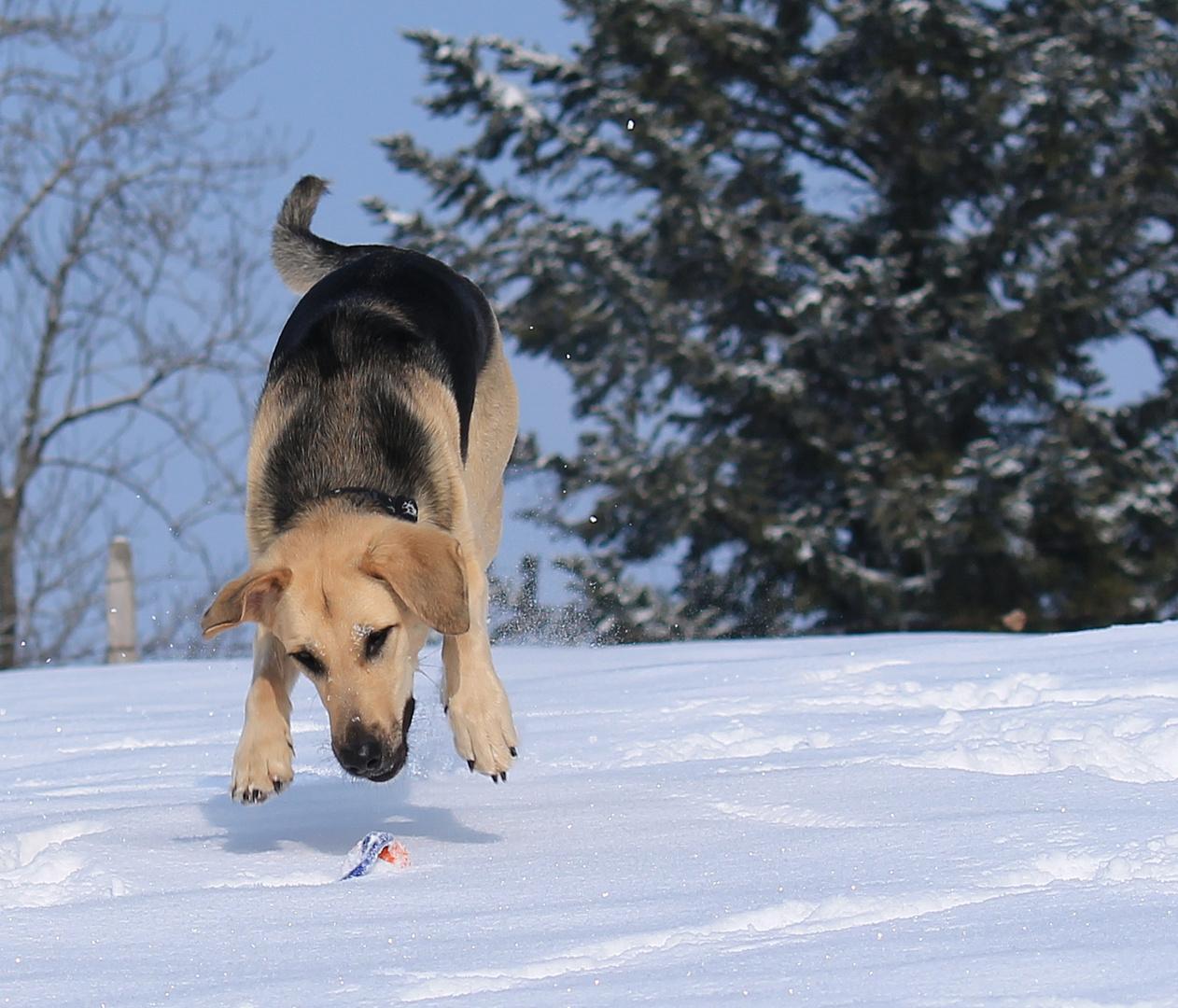 Action im Schnee 2