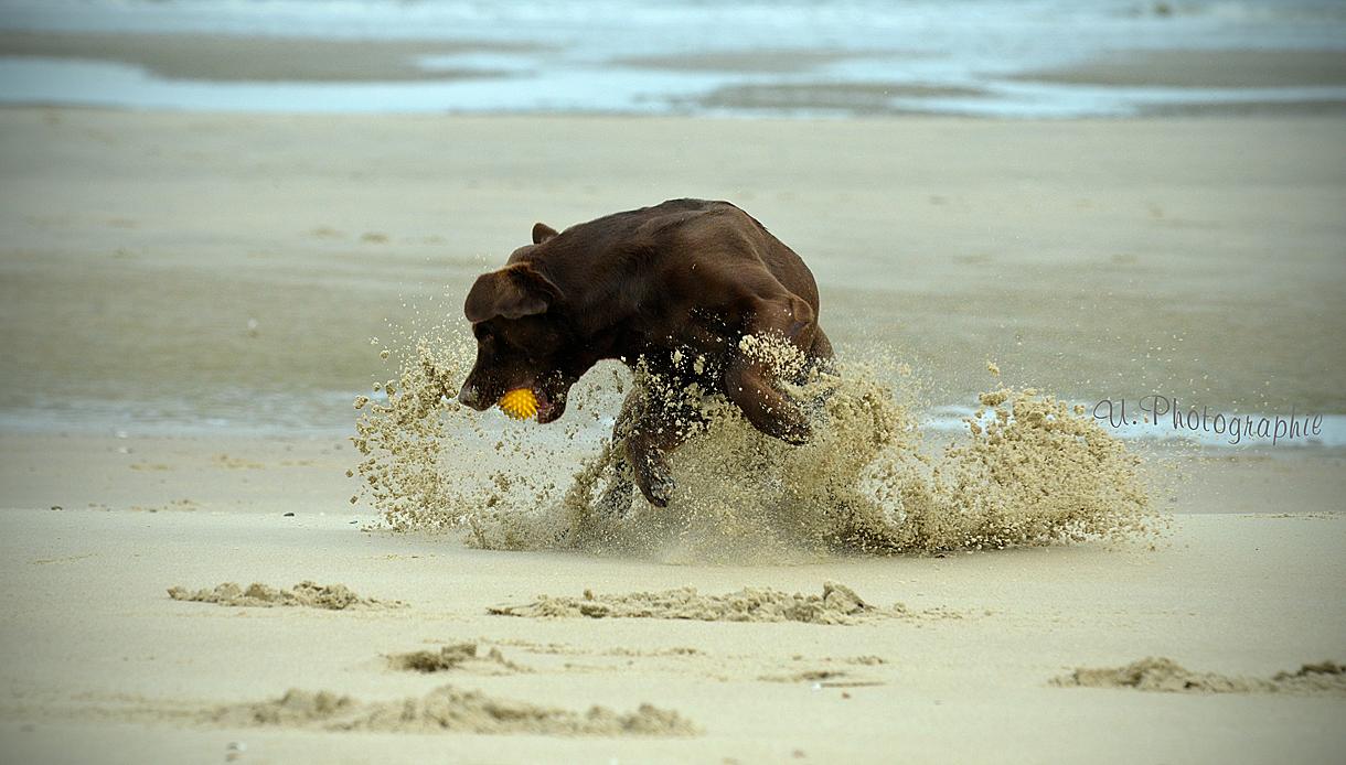 ..Action on the Beach ;-))