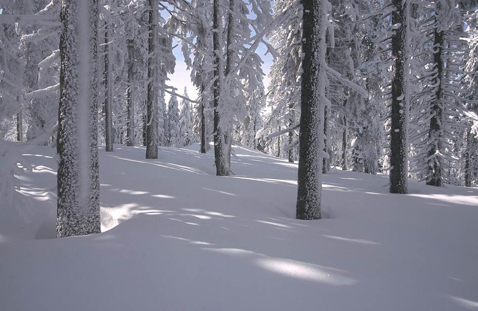 Adalbert Stifters Hochwald im Winterkleid